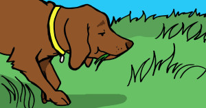 Why Do Dogs Eat Grass, And Is It Bad For Them?